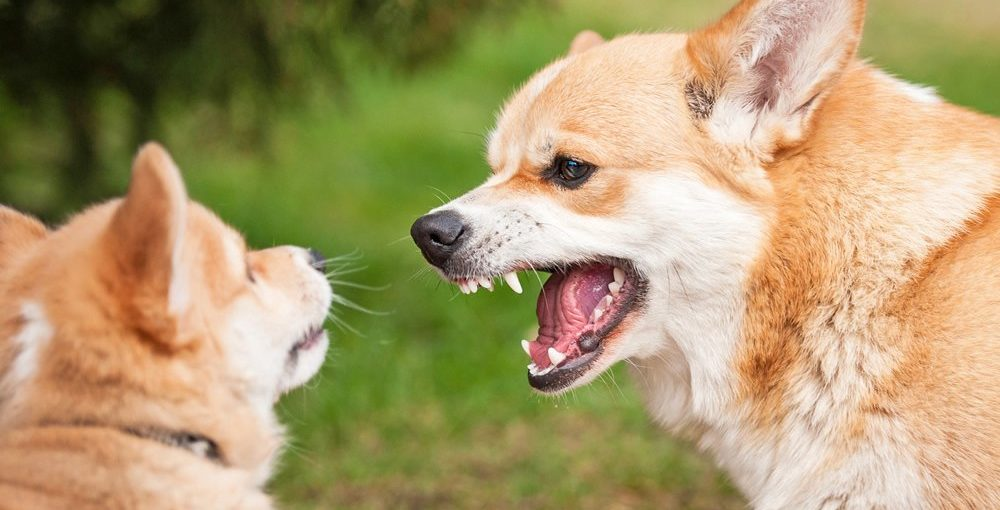 Aggressive Dog Breeds