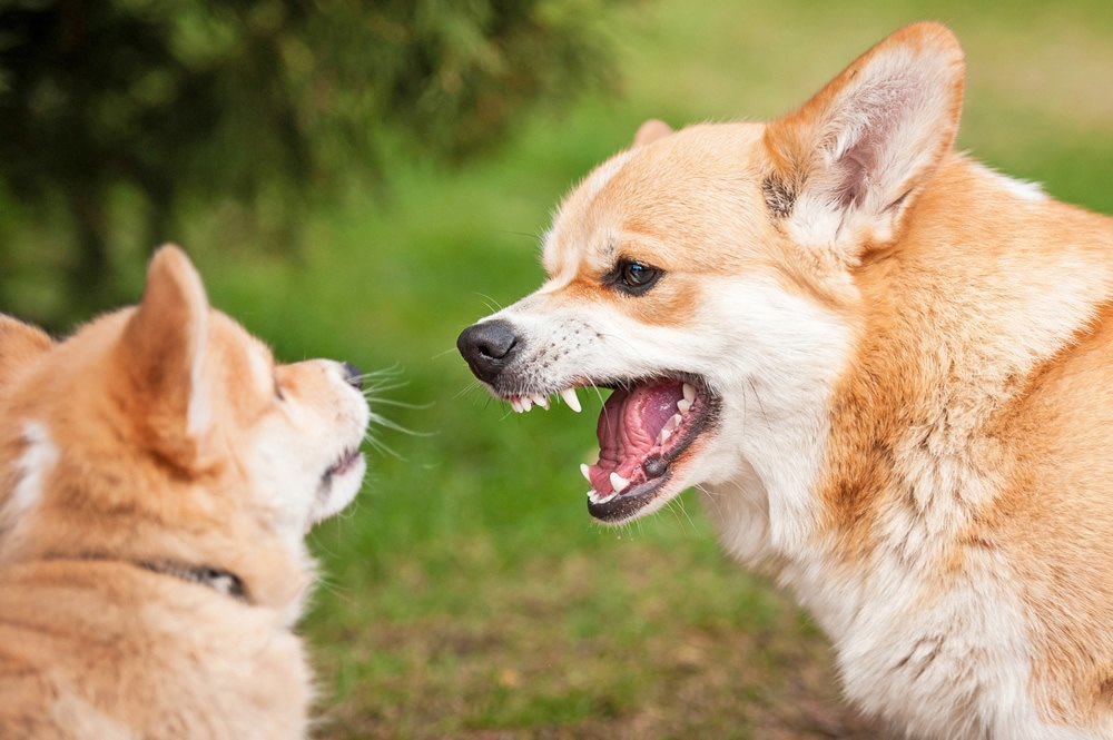 Aggressive Dog Breeds