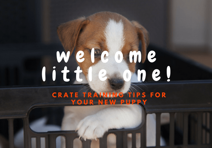 Tips On How To Crate Train Your New Puppy
