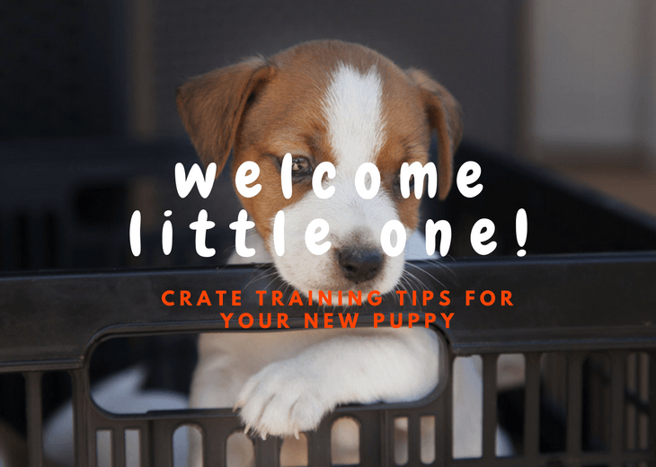 Tips On How To Crate Train A Puppy