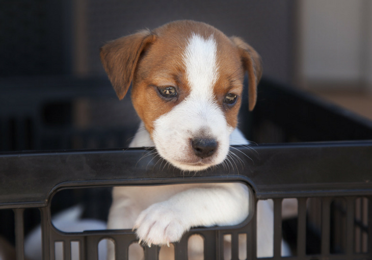 How To Crate Train Your New Puppy Five Phases You Can Follow