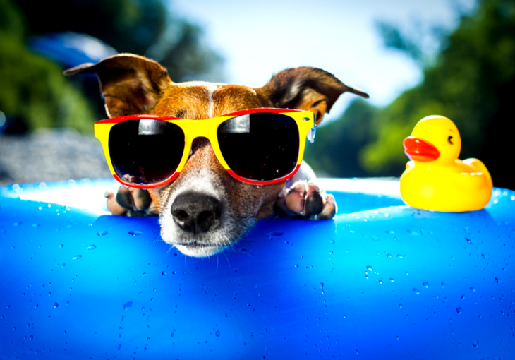 Pooch Approved Dog Summer Safety Tips