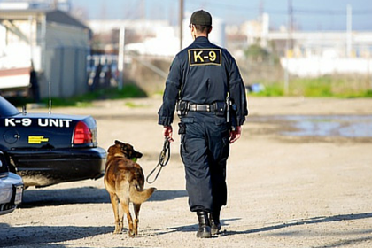 Police Service Dog - K-9 Unit Image