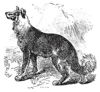 German Shepherd Dog Breed Image