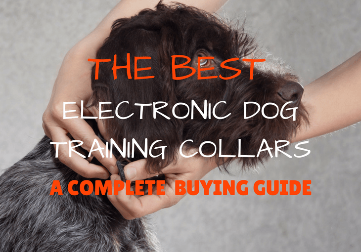 Best Electronic Dog Training Collars Buyer's Guide