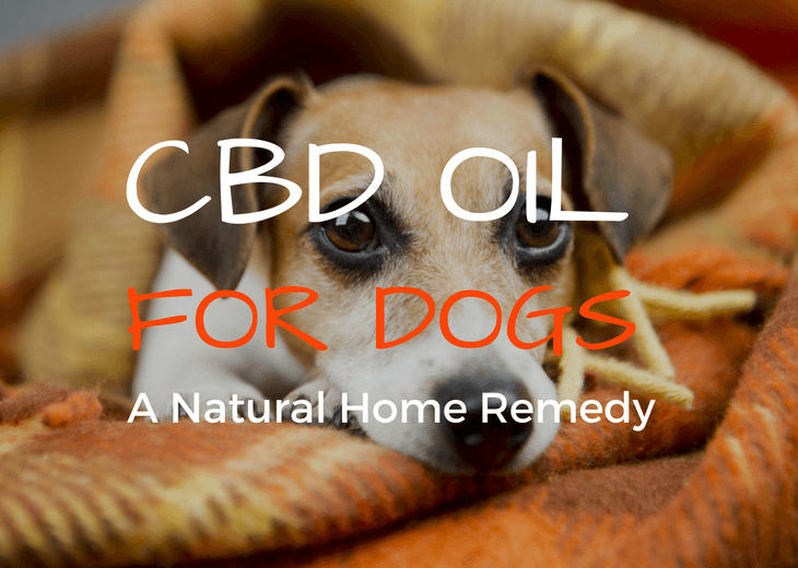 Can CBD Oil Be Used On My Dog