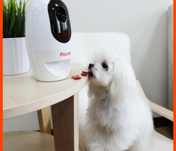 Pawbow Pet Camera Review