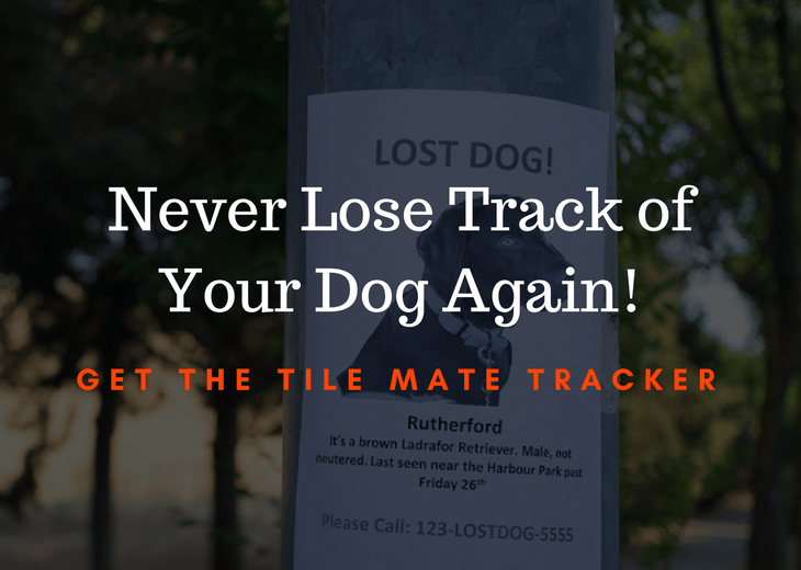 Find Lost Canine With The Tile For Dogs