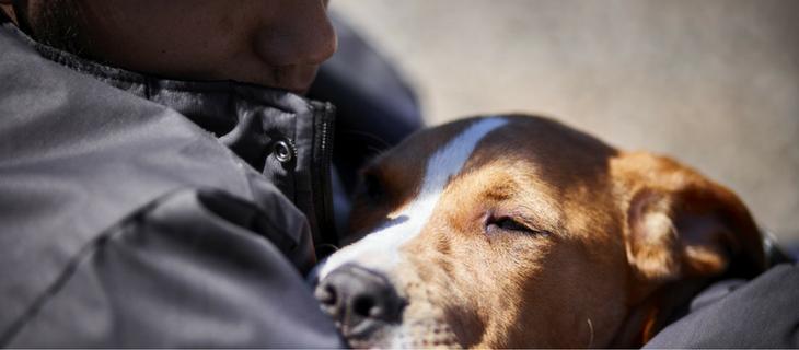 Seizure Alert Dog