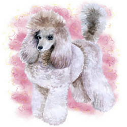 The History Of The Poodle