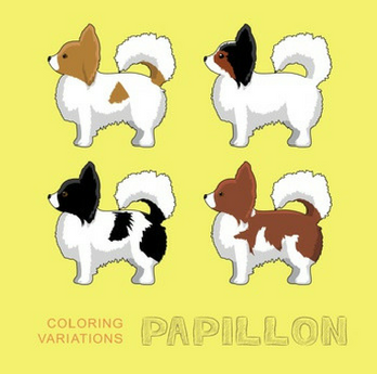Papillon Coloring Variations