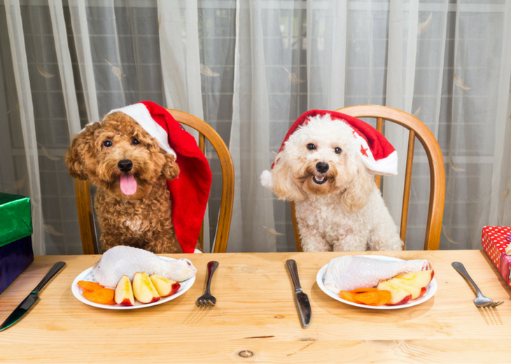Healthy Holiday Dinner For Dogs
