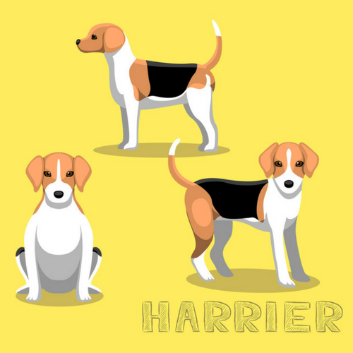 Harrier Dog Image