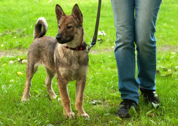 12 Loose Lease Dog Walking Tips