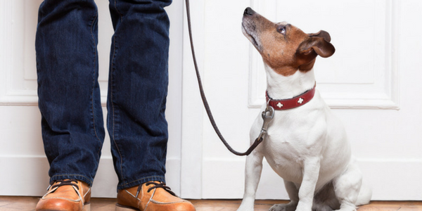 Start Loose Leash Dog Walking Indoors