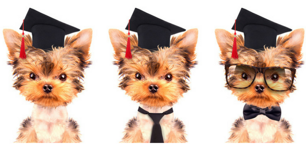 Three puppies graduating dog school