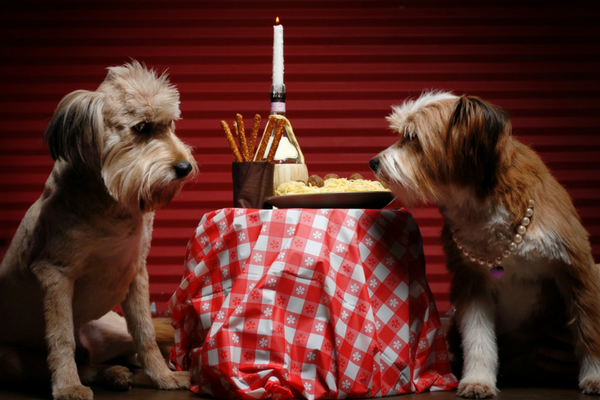 Two dogs socializing over a plate of spaghetti
