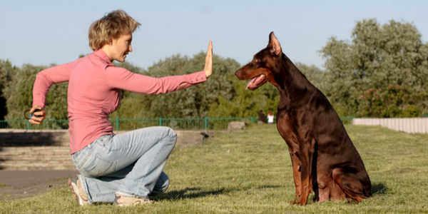 Girl Training Dog To Stay