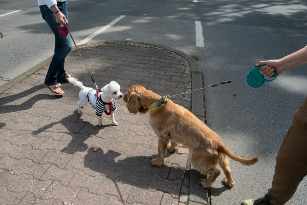 Two Dogs Socializing On Leash