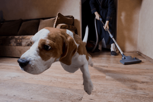 Stop Dog Eating Poop By Cleaning House
