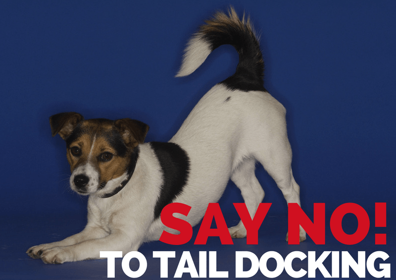 Say No To Tail Docking Image