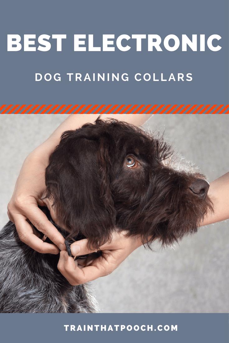 Best Electronic Dog Training Collar