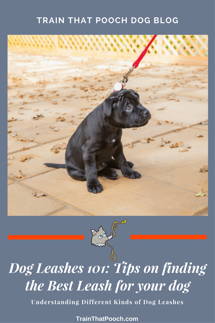 Tips For Finding The Right Dog Leash Pinterest Graphic