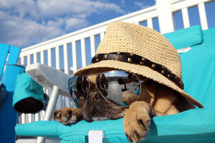 Dog With Sunglasses And Hat Laying On Chair