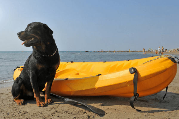 Dog With Kayak