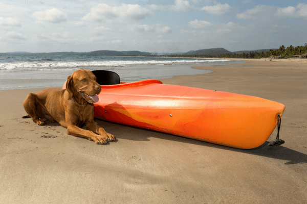 Canine Laying Beside A Kayak