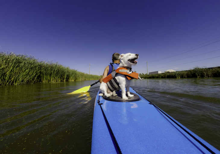 Kayaks For Dogs Image
