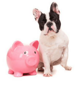 Dog With Pink Piggy Bank