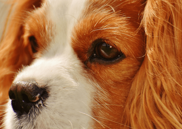 Watch Out For Skin Cancer In Dogs: Be Proactive With These ...