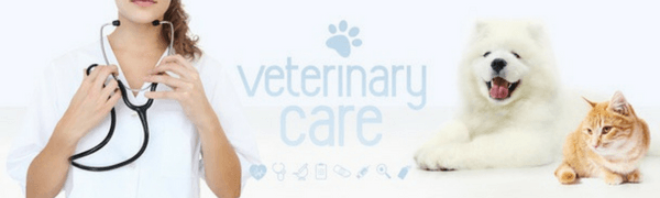Veterinary Care For Skin Cancer In Canines