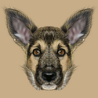 Domesticated Dog Illustration