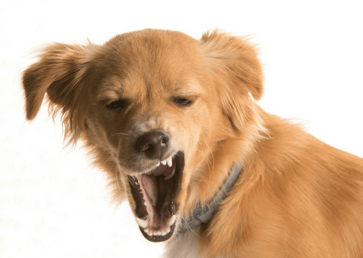 Why Do Dogs Yawn