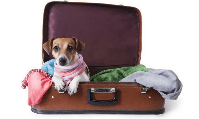 Dog Traveling In Suitcase