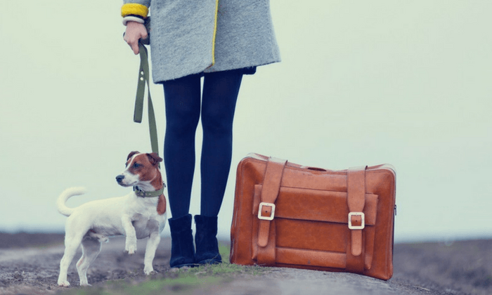Girl Traveling With Her Dog