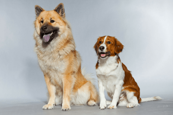 Two Different Sized Dogs And Breeds