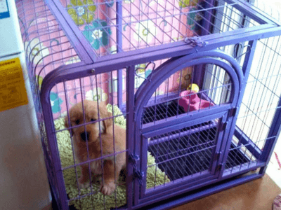 Puppy Potty Training In Crate