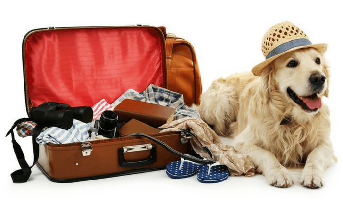 Tips For Getting Ready For Your Trip  With Your Dog
