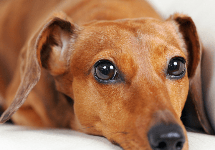 5 Everyday Household Things That Are Toxic For Dogs
