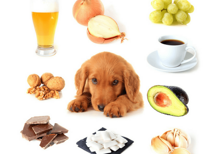 Dog Surrounded By Toxic Foods For Canines
