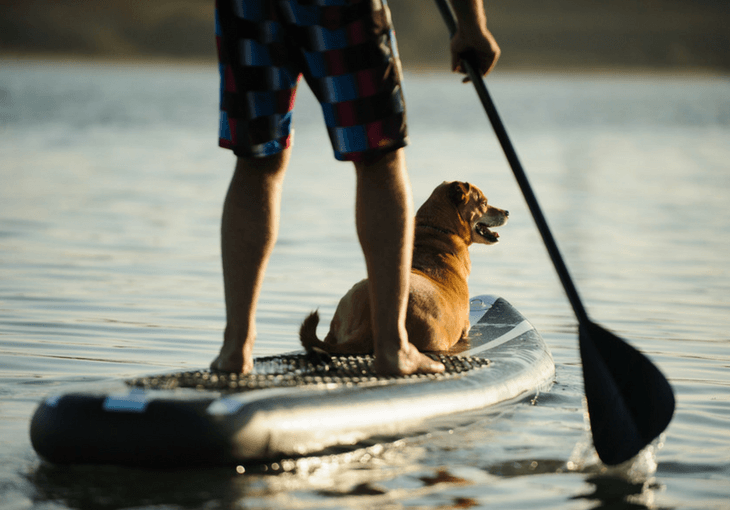 Paddle Boarding For Dogs