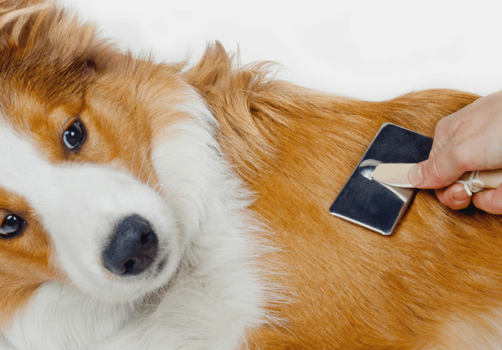Train Your Dog To Like Being Groomed