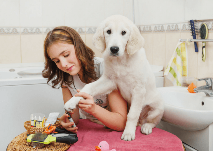 Girl Grooming Her Dogs Nails