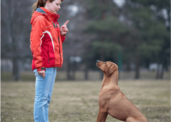 Girl And Dog Practicing The Focus Command