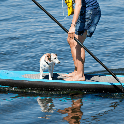 Person Getting On Paddle Board With Dog