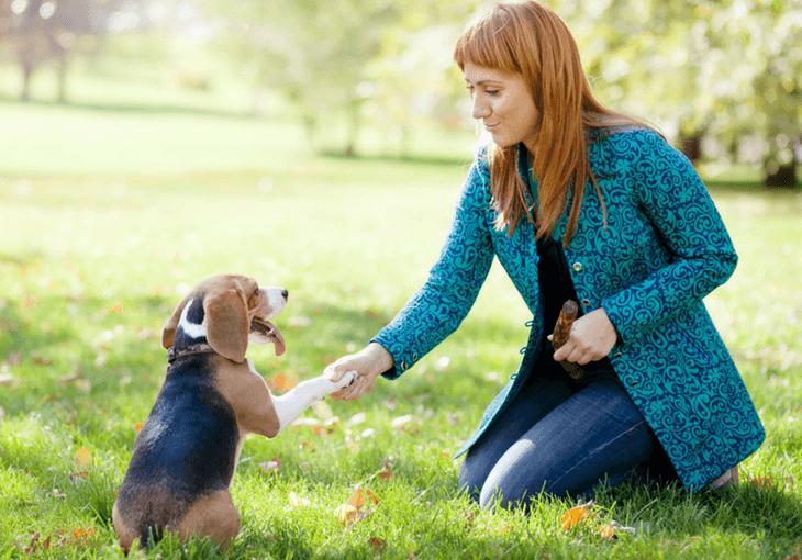 Girl Teaching Your Dog To Listen
