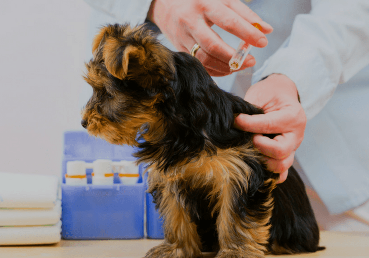 Are Dog Vaccines Needed Or Not